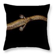 Nauta Palm Foot Salamander Throw Pillow