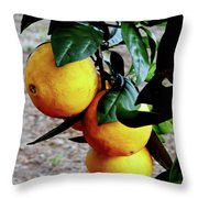 Naval Oranges On The Tree Throw Pillow