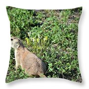 Nebraska Prairie Dog Throw Pillow