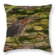 Nervous Green Heron Throw Pillow