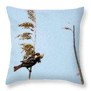 Nest Building Sparrow   Throw Pillow