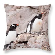 Nesting Gentoo Penguins Throw Pillow