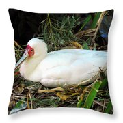 Nesting Spoonbill Throw Pillow