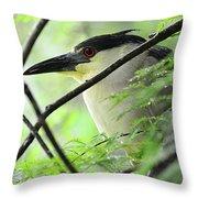 Nestled Night Heron Throw Pillow
