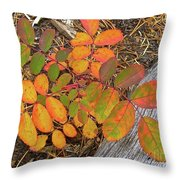 New And Old Life Cycles Throw Pillow by Alan Johnson