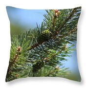 New Growth Pinecone At Chicago Botanical Gardens Throw Pillow