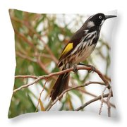 New Holland Honey-eater Throw Pillow