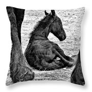 New Life - Friesian Throw Pillow