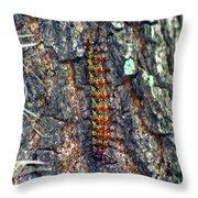 New Orleans Buck Moth Caterpillar Throw Pillow