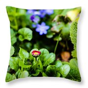 New Season For Bellis Perennis Bellissima Red Throw Pillow