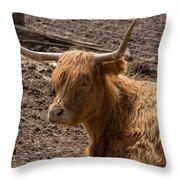 New Zealand Cow Throw Pillow