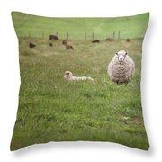 New Zealand Sheep Throw Pillow