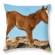 Newborn Colt Throw Pillow