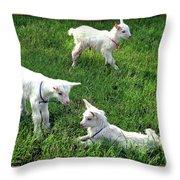 Newborn Goats Throw Pillow