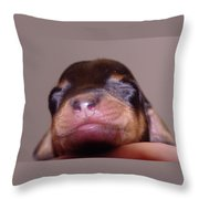Newborn Puppy   Throw Pillow
