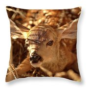 Newly Born Fawn Hiding In A Saskatchewan Field Throw Pillow