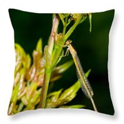 newly emerged Rambur's forktail Throw Pillow