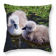 Newly Hatched Cygnets At Abbotsbury Throw Pillow