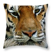 Nice Cat Throw Pillow