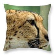 Nice Kitty Throw Pillow