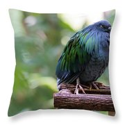 Nicobar Pigeon Throw Pillow