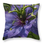 Nigella Damascena 3 Throw Pillow