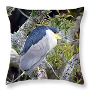 Night Heron Throw Pillow