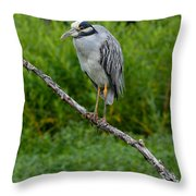 Night Heron On Slim Branch Throw Pillow