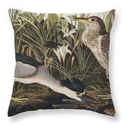 Night Heron Or Qua Bird Throw Pillow