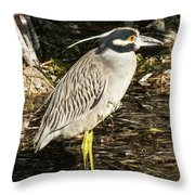 Night Heron Standing On A Rock In Key West Throw Pillow