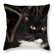 Night Hunter Throw Pillow
