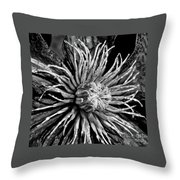 Niobe Clematis Study In Black And White Throw Pillow
