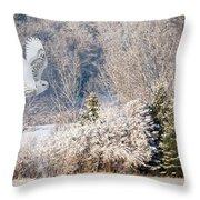 Snowy Owl Flight Throw Pillow