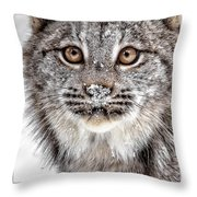 No Mouse This Time Throw Pillow