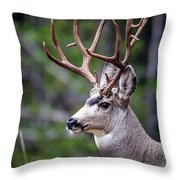 Non-typical Mule Deer Buck Portrait. Throw Pillow