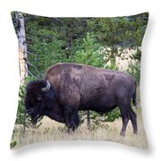 North American Buffalo Grazing Near Edge Of Woods During Late Su Throw Pillow