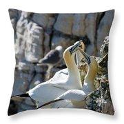 North Atlantic Gannets Throw Pillow