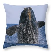 North Atlantic Right Whale Breaching Throw Pillow by Tony Beck