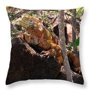 North Seymour Island Iguana In The Galapagos Islands Throw Pillow