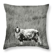 North Yorkshire Moors Sheep Throw Pillow