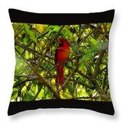 Northern Cardinal Work Number Two Throw Pillow