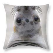 Northern Elephant Seal Looking Back Throw Pillow
