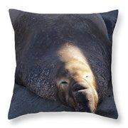 Northern Elephant Seal Throw Pillow