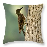 Northern Flicker Halo Throw Pillow