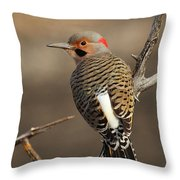 Northern Flicker On Branch Throw Pillow