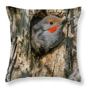 Northern Flicker Pokes His Head Out Throw Pillow
