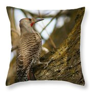 Northern Flicker Woodpecker 1 Throw Pillow