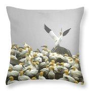 Northern Gannet Throw Pillow