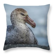 Northern Giant Petrel Sitting On Sandy Beach Throw Pillow