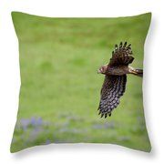 Northern Harrier Fly By Throw Pillow